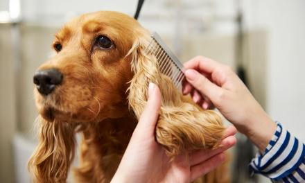 Animal Palace Pet Grooming