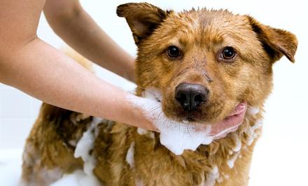 Scrubbers Self-Serve Dog Wash & Grooming- Royal Oak