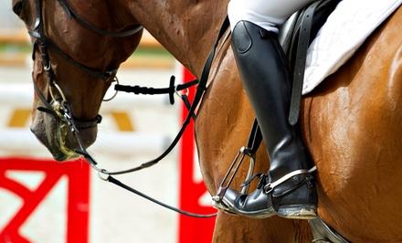 Integrity Sport Horse OC