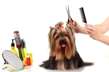 Jolly Mutt Pet Grooming Salon