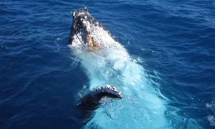 Ocean Explorer Cruises