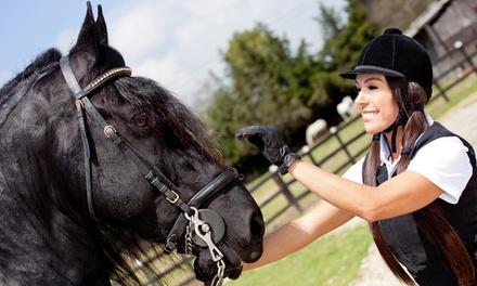 Ocala Equestrian Academy