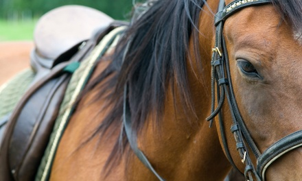Century Farm Equestrian Center