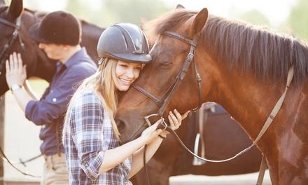Lisa D. Mullen Riding Instruction