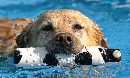 Doggy Paddle Aquatic Center For Dogs