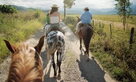 Arkansas Equine Adventures