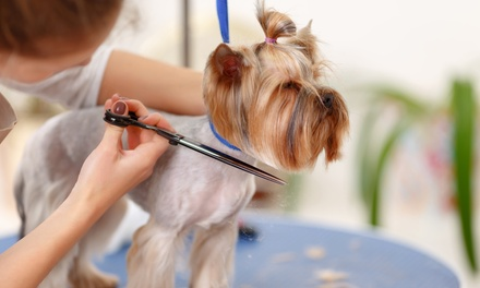 Doggie Paws Salon